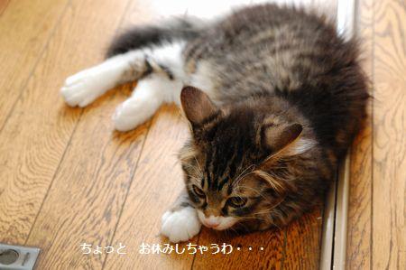 20130727meichan3.jpg