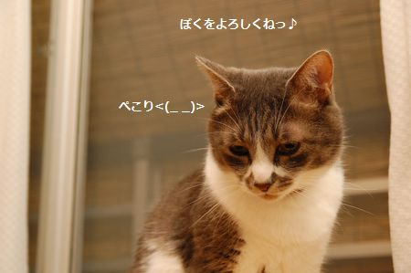 20130730miikun5.jpg