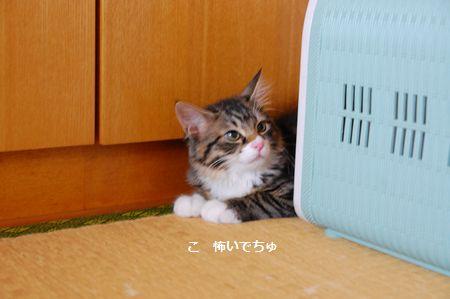 20130814meichan.jpg