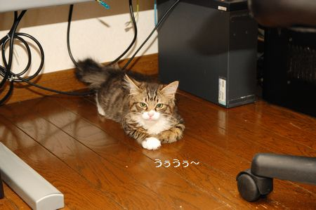20130814meichan2.jpg