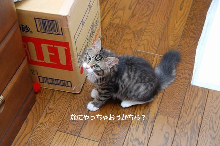 20130817meichan2.jpg
