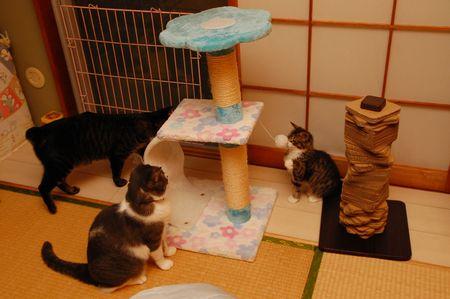 20130822kotetsumiikunmeichan.jpg