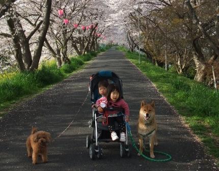 ブログ 桜大中公園 007