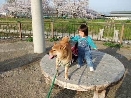 ブログ 桜大中公園 013