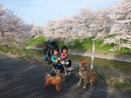 ブログ 桜大中公園 009