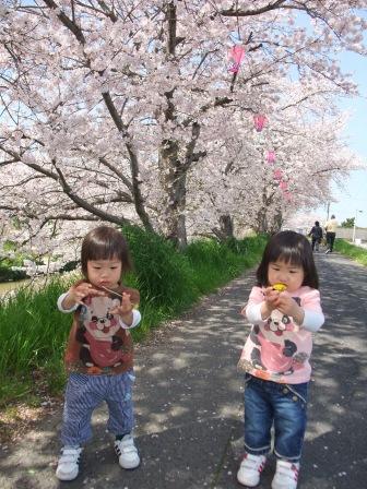 ブログ 桜大中公園 003