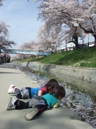 ブログ 桜大中公園 028