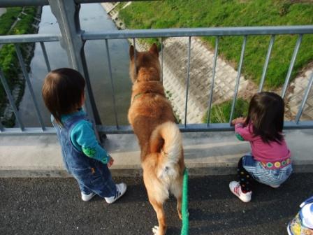 ブログ 桜大中公園 017
