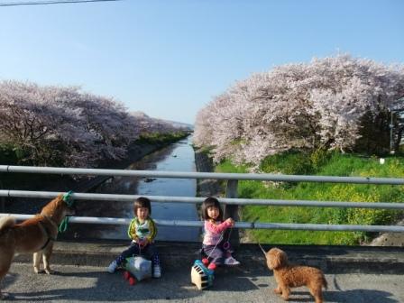 ブログ 桜大中公園 047