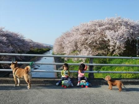 ブログ 桜大中公園 045