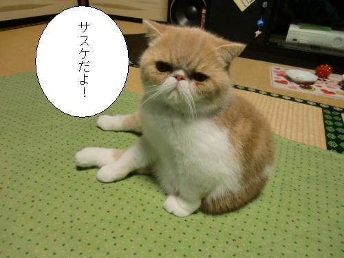 繧オ繧ケ繧ア+1906_convert_20101208011923