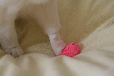 ちびぃちゃんの手袋