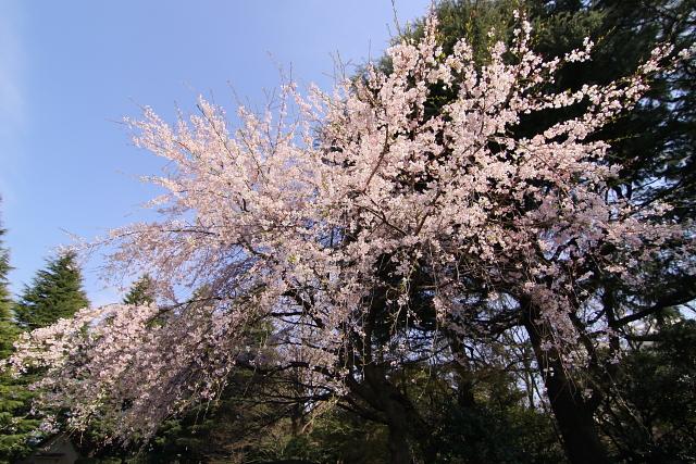 furu2010-5656.jpg