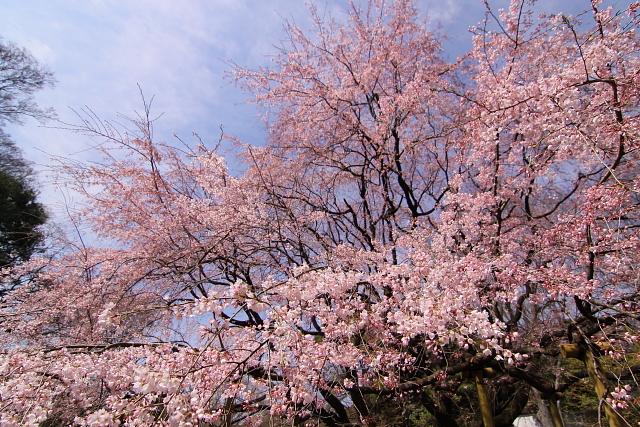 rikugi2010-5544.jpg