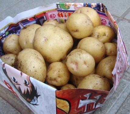 5月18日収穫ジャガイモ1