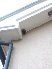 8月1日ハチの巣1