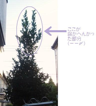 8月2日月桂樹
