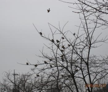 1小鳥のなる木+046_convert_20100307104741