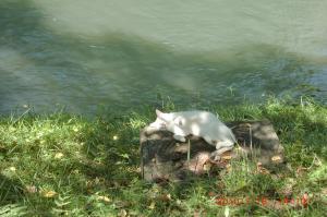 2010+07+18+玉川のネコ+092_convert_20100719181831