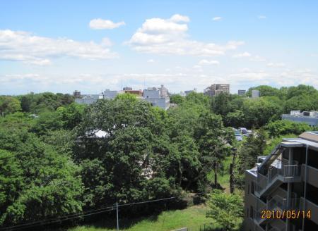 清瀬市病院街の緑・069_convert_20101204141712