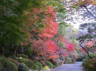 門からの紅葉