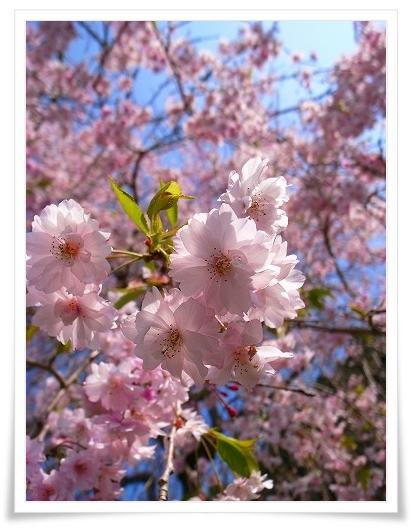 2011-04-27 秩父路スナップ 016