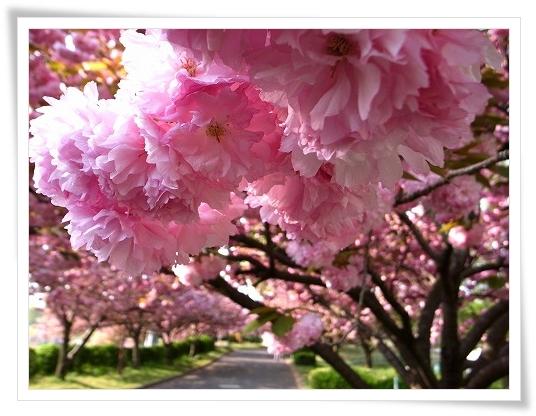2011-04-27 川越水上公園 018