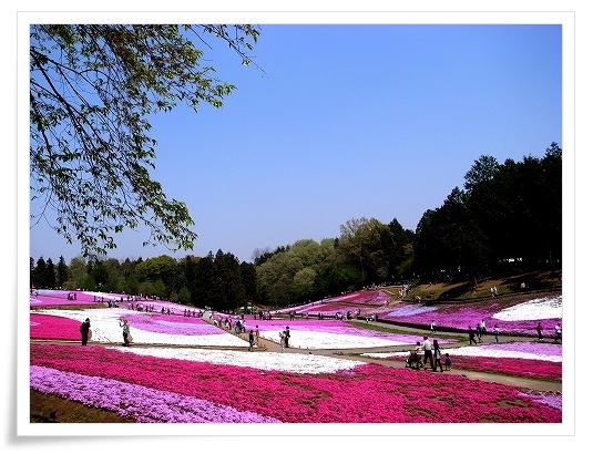 2011-04-27 羊山公園 芝桜 050