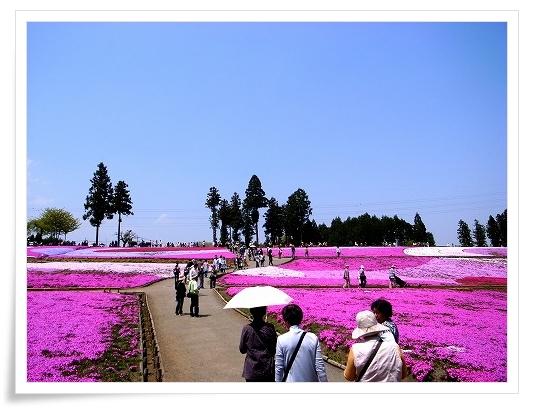 2011-04-27 羊山公園 芝桜 015