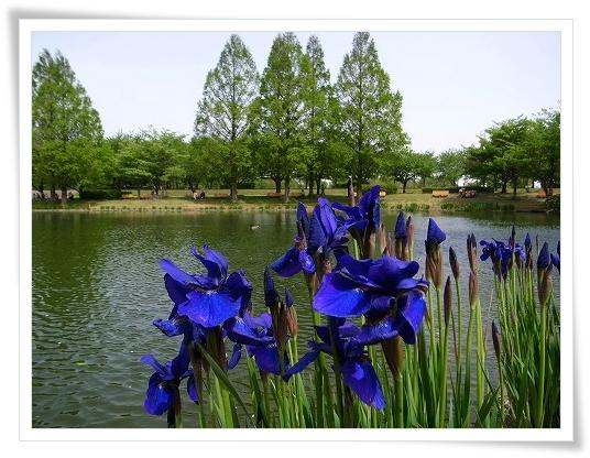 2011-05-02 川越水上公園 002