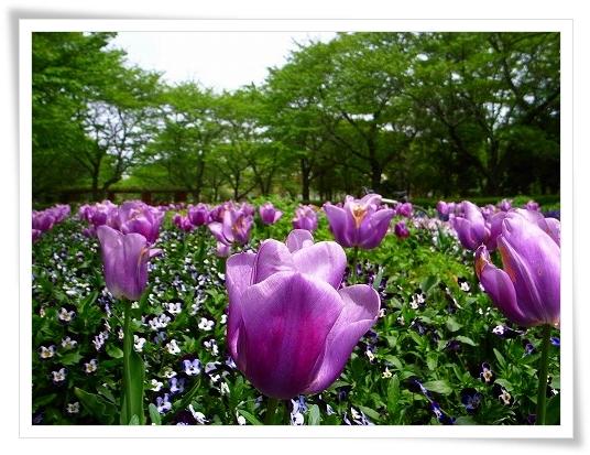 2011-05-02 城山公園 001