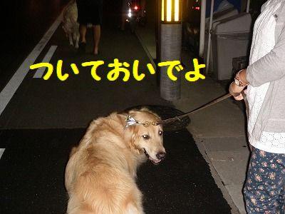 036_20100813000805.jpg