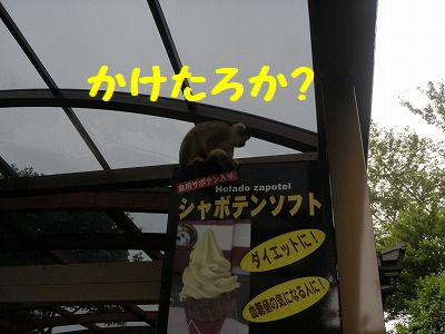 127_20100705105323.jpg