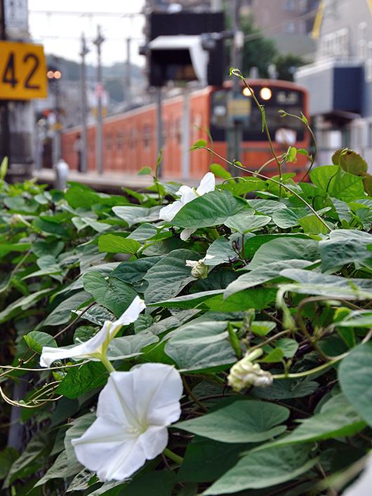 20090928東青梅
