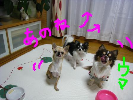 IMG_13065.jpg