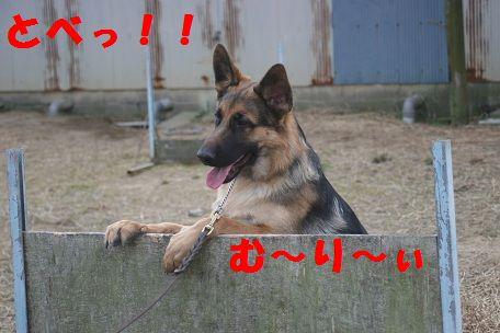 IMG_6422.jpg