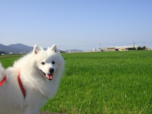 ☆お散歩日和☆^-^☆