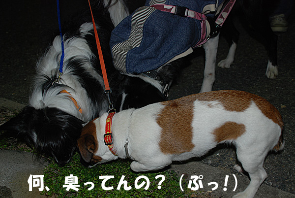 DSC_9035.jpg