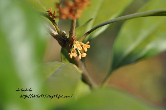 秋の植物展