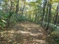 黄葉の登山道ー1