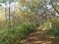 黄葉の登山道ー2