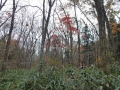 栄蔵室の紅葉