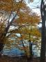 歌ケ浜周辺の紅葉ー1
