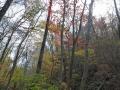 笹平の紅葉