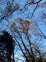 自然研究路の紅葉