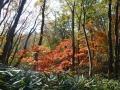 岩稜コースの紅葉
