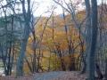 狸窪周辺の紅葉