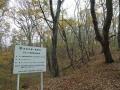 定波ブナ林の紅葉