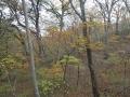 定波ブナ林の黄葉