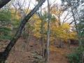 観音水周辺の紅葉
